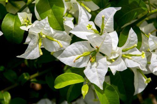 pavasario balta,gėlė,gamta,žalias,sodas,augalas,gėlės,grožis,žiedlapis,apdaila,pavasaris,išdėstymas,geltona gėlė,dekoratyvinis,gražus,augalai,spalvingos gėlės,egzotiškas,spalvos,Kvepalai,botanistas,dekoratyvinė gėlė,aplinka,peizažai,kraštovaizdis,botanika,sodininkystė,spalvinga gėlė,gėlių,subtilus gėlių,laukas,balta gėlė,balta
