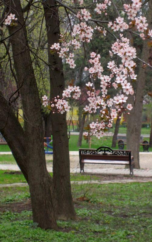 springtime flowers blooming tree