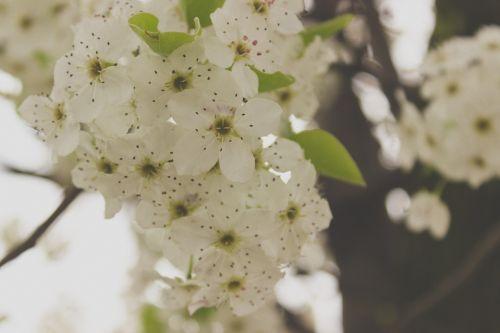 springtime flowers white