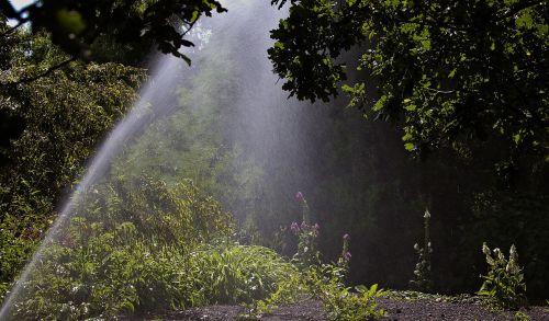 sprinkler watering woodland garden