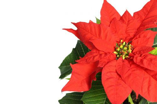 spurge wonderful plant flower
