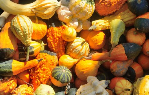squash pumpkins autumn