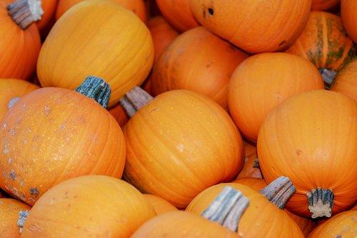 squashes  cucurbita pepo  pumpkins