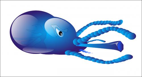 squid sea animal
