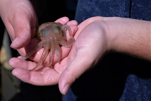 squid  small  hand