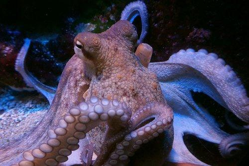 squid  octopus  m