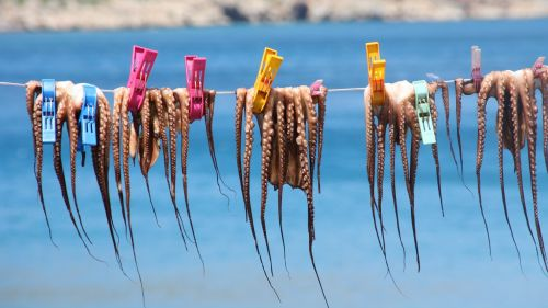 squids clothes line holiday