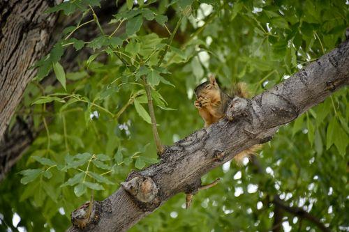 Squint Squirrel