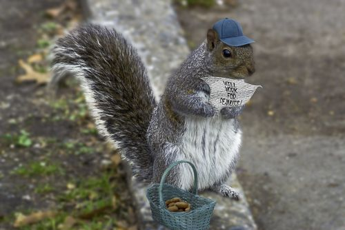 squirrel whimsy composite