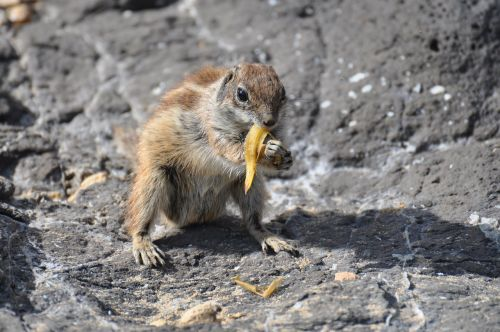 squirrel hungry re