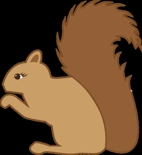 squirrel forest animal animal