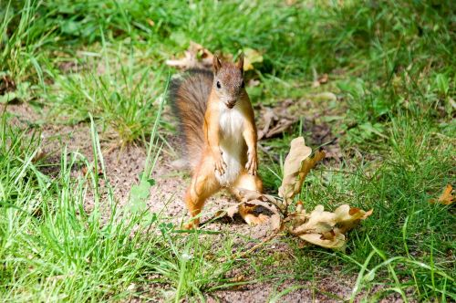 squirrel animal animal planet