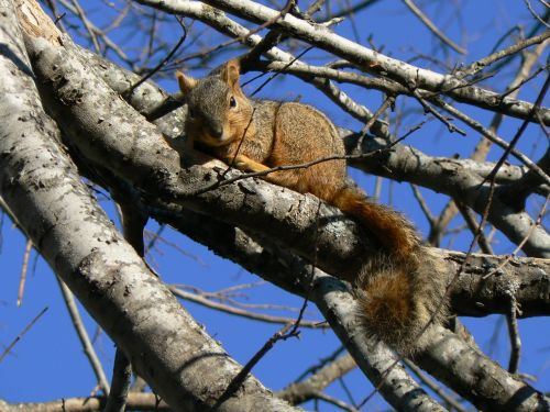 squirrel relaxed blue skies