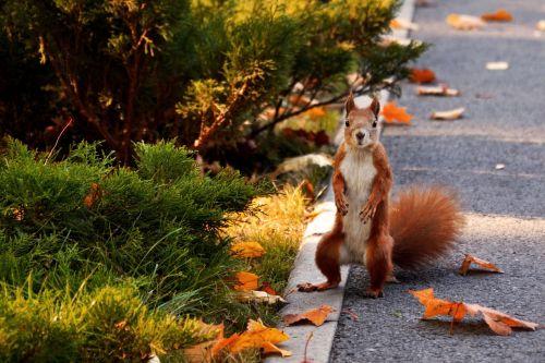 squirrel park autumn