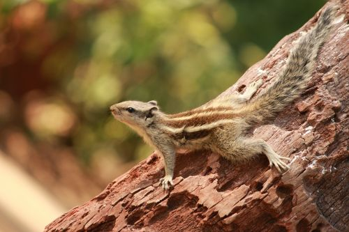 squirrel animal cute