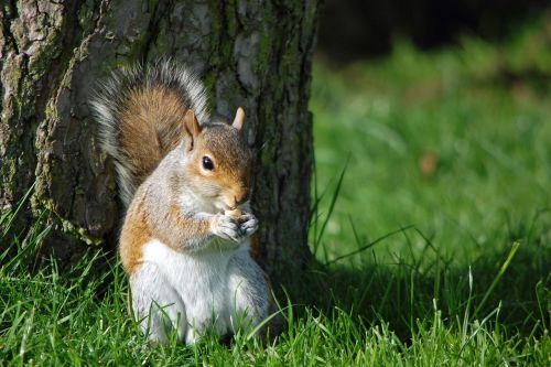 squirrel eating nut nature