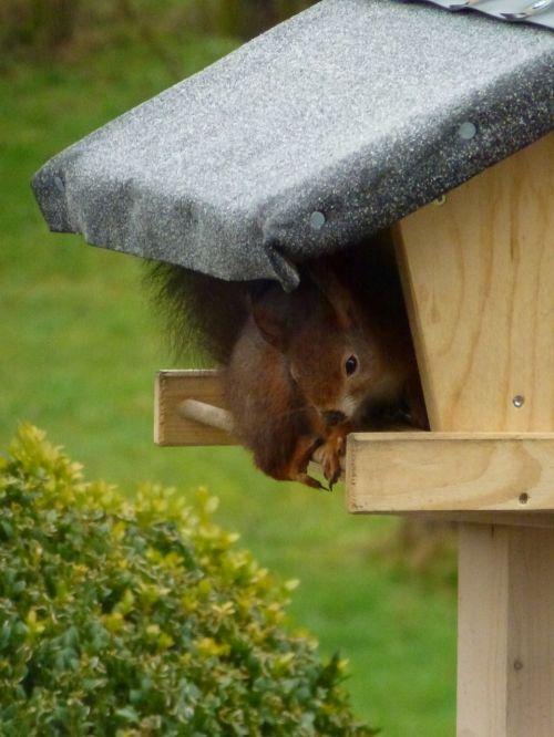 squirrel aviary animals