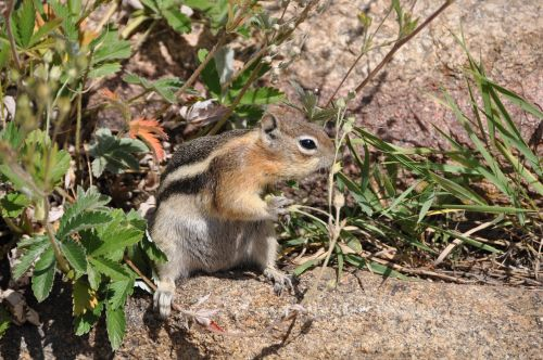 squirrel chipmunk food