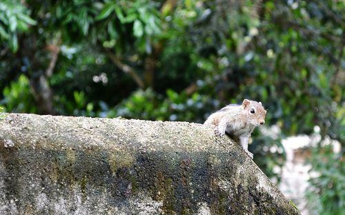 squirrel mammal animal