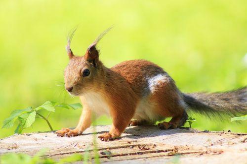 squirrel animal park
