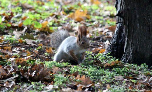 squirrel protein-hlopotun'ja view