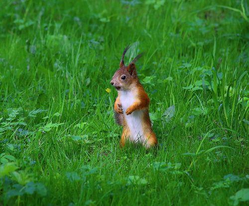 squirrel park wildlife