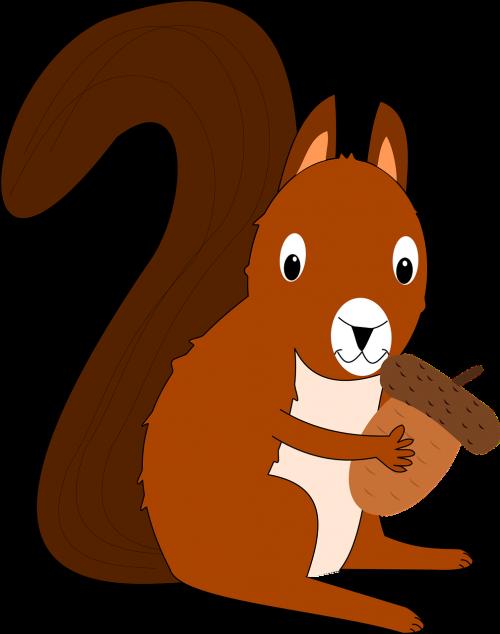 squirrel acorn forest animal