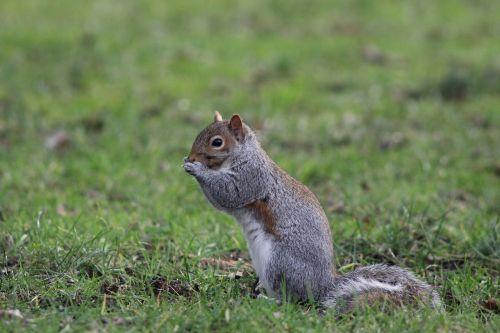 squirrel nature wildlife