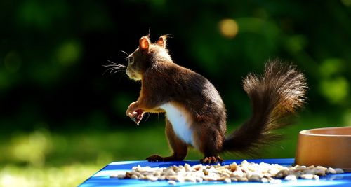 squirrel peanuts chucks