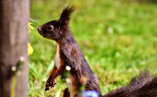 squirrel nager nature