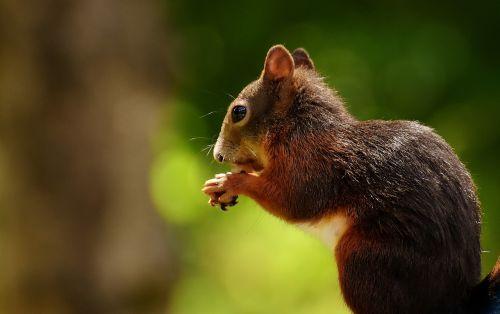 squirrel nager garden