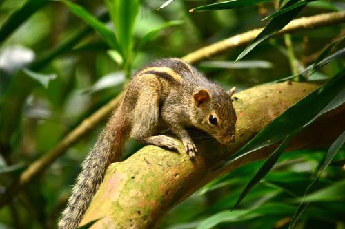 squirrel animal wildlife