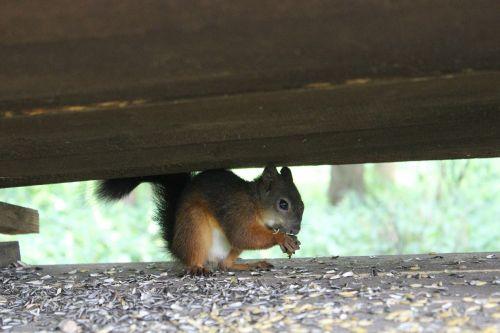 squirrel eat cute