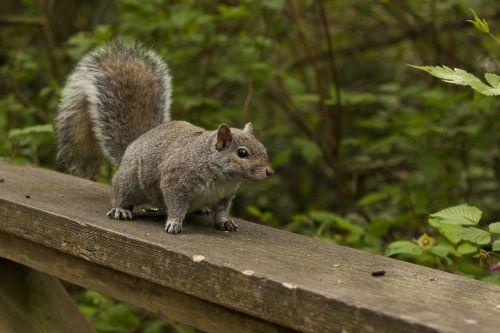 squirrel nature wild