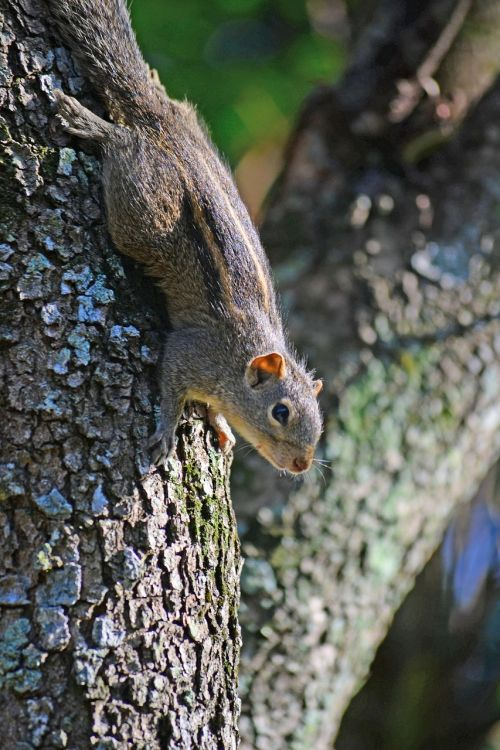 squirrel cute animal