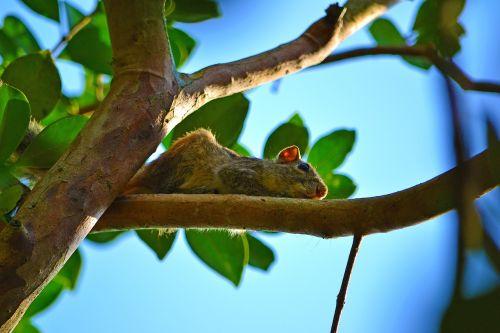squirrel wildlife animal
