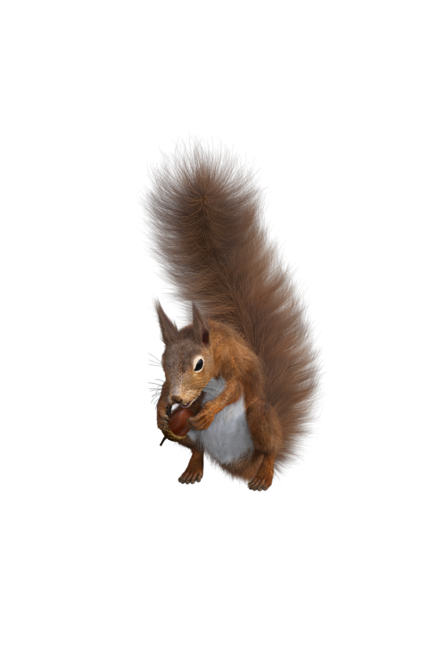 squirrel rodent sciurus