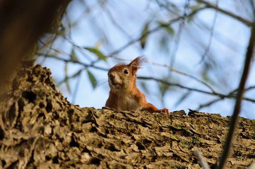 squirrel nature animal