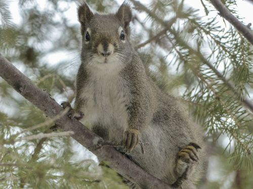 squirrel animal forest