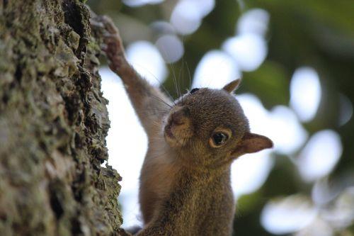 squirrel nuts nature