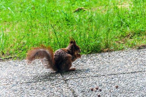 squirrel  food  nature