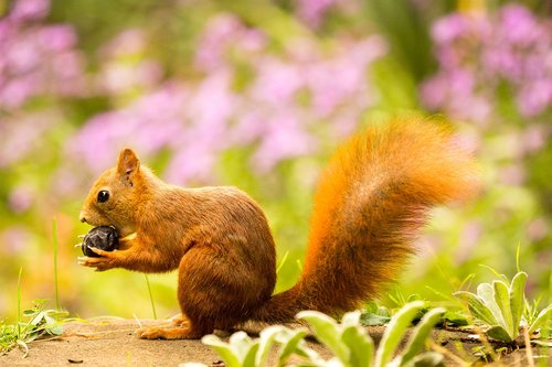 squirrel  nut  autumn