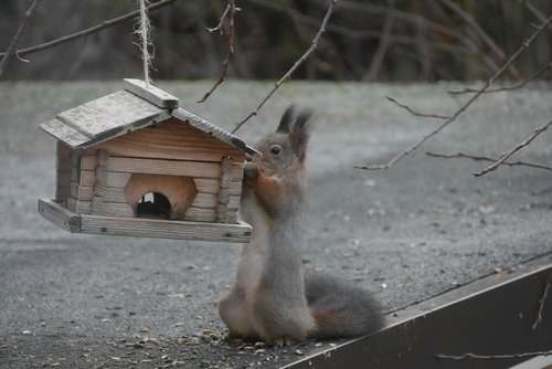 squirrel  birdhouse  hungry