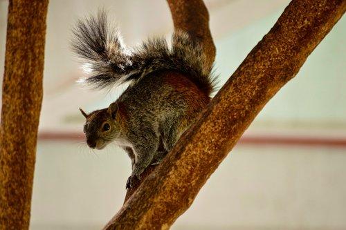 squirrel  forest  coffee