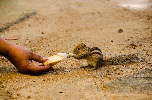 squirrel  palm squirrel  cute