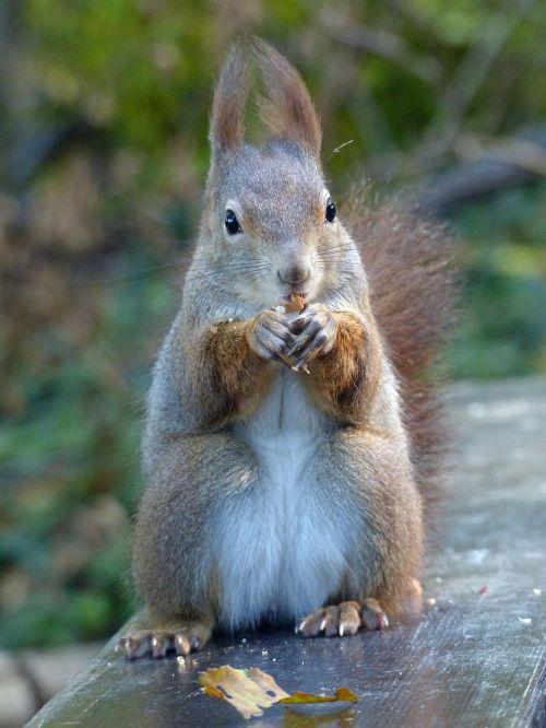 squirrel nut eat