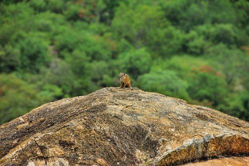 squirrel rock nature