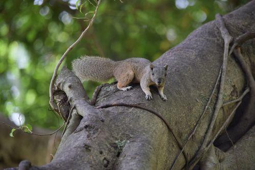 squirrel brown startled animal