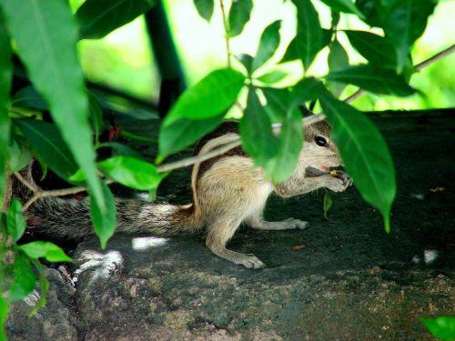 squirrels hiding animals