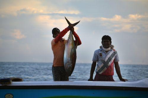 sri lanka fischer fishing